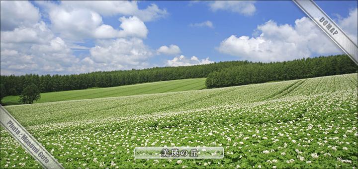 北海道旅行:観光地:美瑛