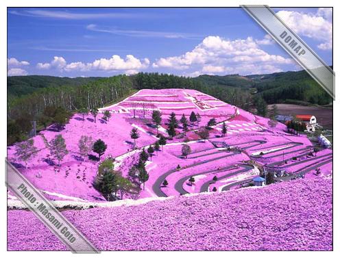 ひがしもこと芝桜公園~東藻琴
