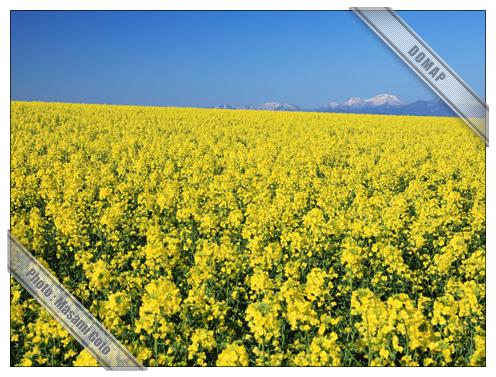たきかわ菜の花まつり~滝川