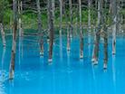 青い池~美瑛町白金